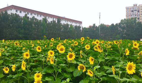 河南涌出5个年产能共计186万吨的包装纸项目